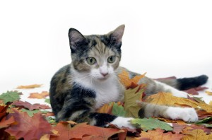Raking is a big part of garden clean-up, but it can fall and injure a small cat.